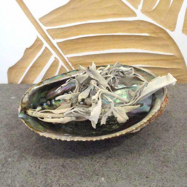YogaStyles Wierookbrander Abalone Schelp Medium + 50 gram Salie